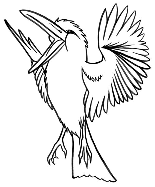 Printable Coloring Picture Of A Kookaburra Coloring Pages